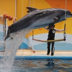 İstanbul Dolphinarium Yunus Gösteri Merkezi
