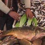 Balıkçı İrfan`ın Balık Restaurantı