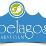 Pelagos Akvaryum